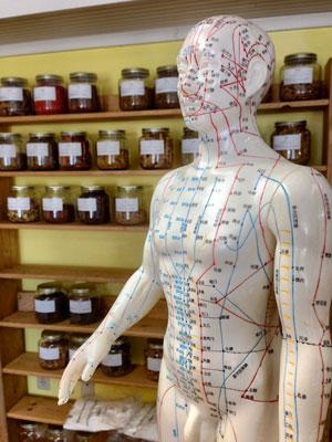 méridiens acupuncture
